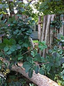 Tree in Kevin's backyward