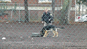 K9 unit investigates a suitcase tossed into a Lakewood school yard