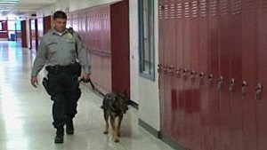 Police dog in a hallway at Lacey High School